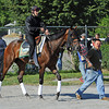 Five Sixteen heads to the track Thursday morning...<br /> © 2012 Rick Samuels/The Blood-Horse