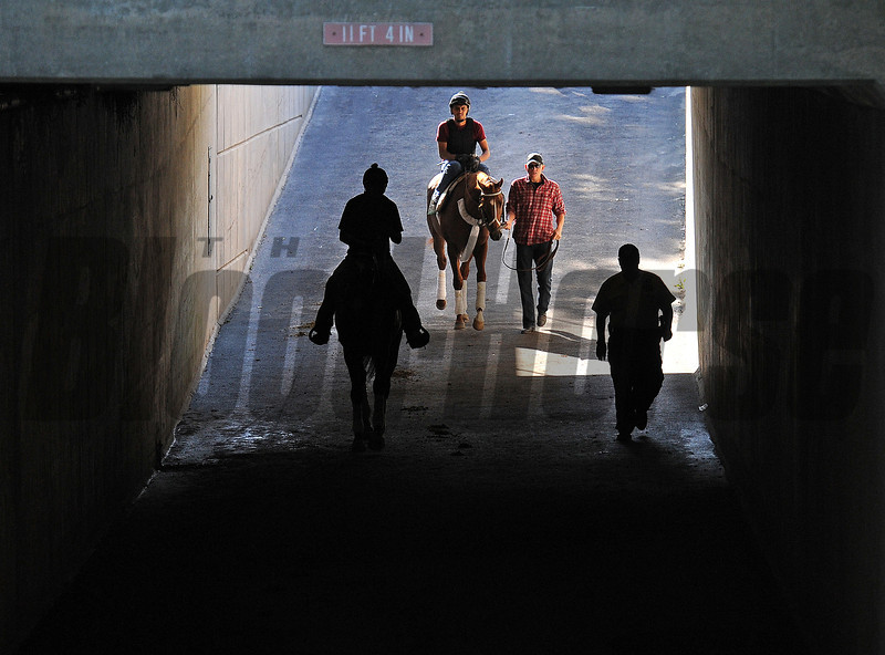Kentucky Derby and Preakness winner I'll Have Another, on his way to school in the Belmont paddock Sunday morning...<br /> © 2012 Rick Samuels/The Blood-Horse