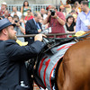 Caption: I'll Have Another is paraded into winner's circle and saddle is ceremoniously removed after Mario Gutierrez come off. Doug O'Neill unsaddles him for the last time.<br /> Belmont Park, June 9, 2012, Elmont, N.Y.<br /> Photo by Anne M. Eberhardt