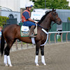 Caption:  Atigun<br /> Belmont Park, June 5, 2012, Elmont, N.Y.<br /> Training hours activity on the track and at the barn.<br /> Photo by Anne M. Eberhardt