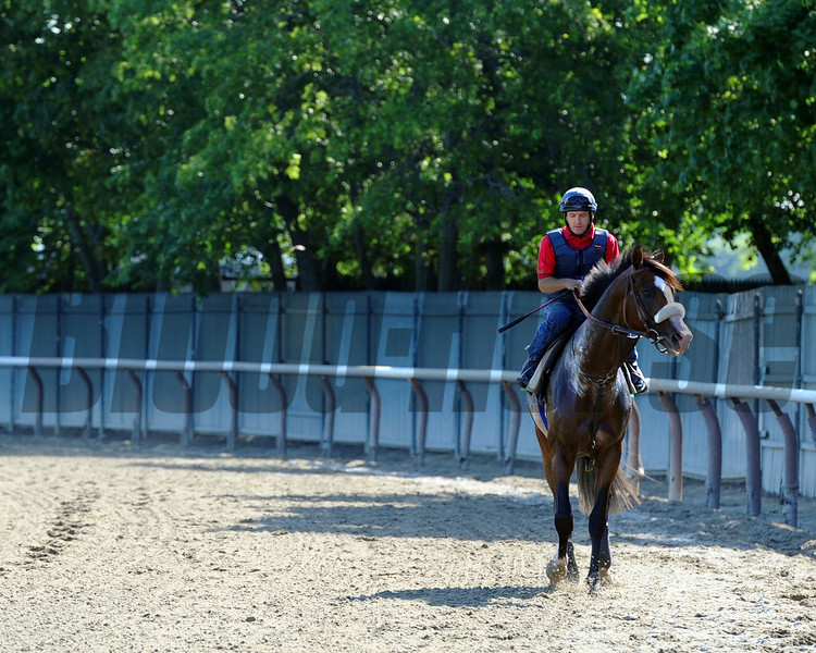 Union Rags on his way back to the barn Thursday morning... <br /> © 2012 Rick Samuels/The Blood-Horse
