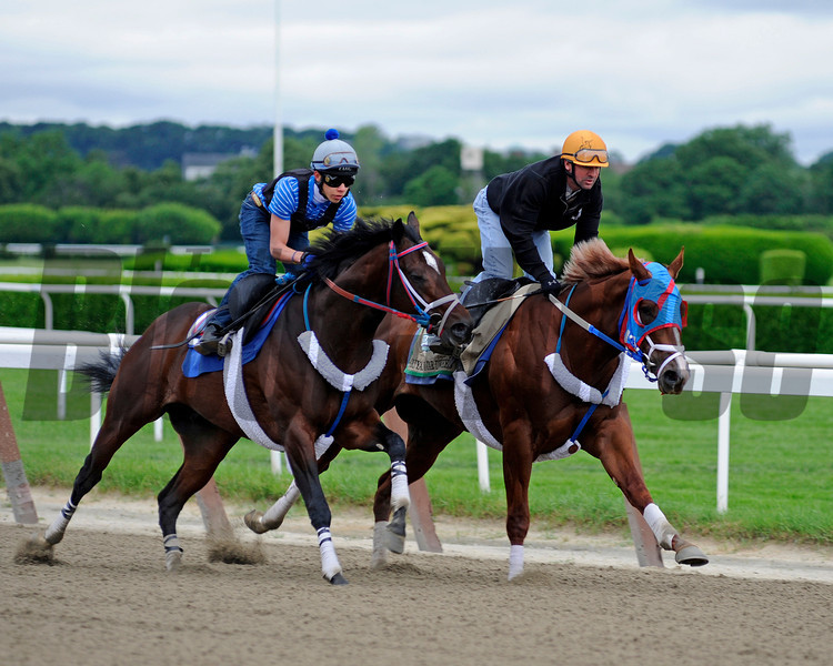 Caption:  Guyana Star Dweej with Kent Desormeaux works<br /> Belmont Park, June 4, 2012, Elmont, N.Y.<br /> Horses on the track in the morning, grazing, and trainers/connections talking and watching their horses.<br /> Belmont2012 Works1 6_4_12 image536<br /> Photo by Anne M. Eberhardt