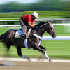 Unstoppable U Thursday morning at Belmont...<br /> © 2012 Rick Samuels/The Blood-Horse