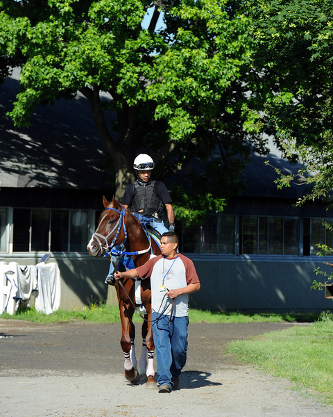 Guyana Star Dweej heads to the track Thursday morning...<br /> © 2012 Rick Samuels/The Blood-Horse