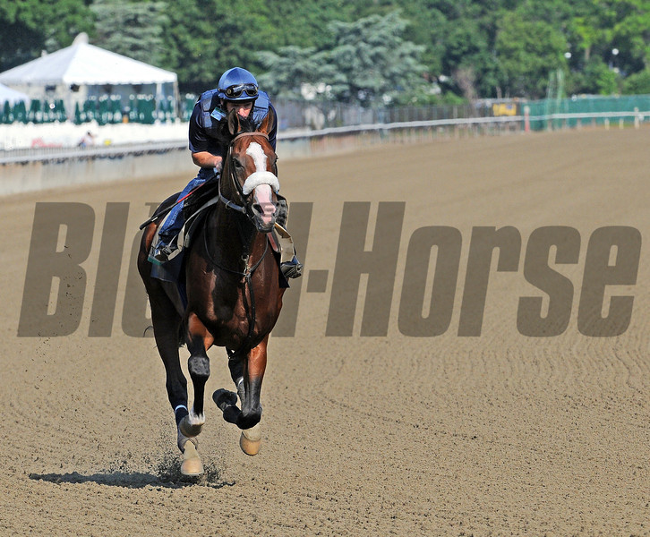 Union Rags has the track to himself Friday morning...<br />  © 2012 Rick Samuels/The Blood-Horse