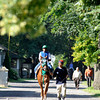 Caption:  Ravelo's Boy walks to track.<br /> Belmont Park, June 8, 2012, Elmont, N.Y.<br /> Training hours activity on the track and at the barn.<br /> Photo by Anne M. Eberhardt