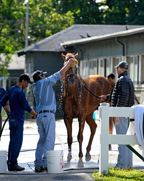 Caption:  I'll Have Another gets a bath<br /> Belmont Park, June 5, 2012, Elmont, N.Y.<br /> Training hours activity on the track and at the barn.<br /> Photo by Anne M. Eberhardt