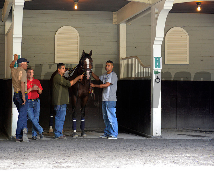 Caption:  Union Rags schooling in the Belmont paddock<br /> Belmont Park, June 7, 2012, Elmont, N.Y.<br /> Training hours activity on the track and at the barn.<br /> Photo by Anne M. Eberhardt