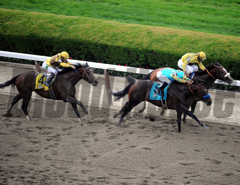 The top 3 finishers in deep stretch of the 144th Running of the Belmont Stakes at Belmont Park on June 9, 2012.<br /> Photo by Chad Harmon
