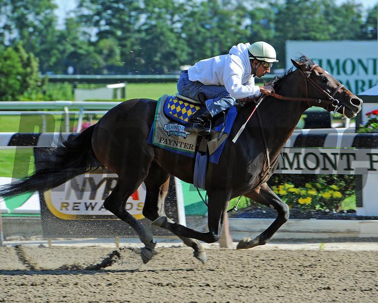 Paynter, Rajiv Maragh up works a bullet seven furlongs in 1:25<br /> Sunday morning at Belmont...<br /> © 2012 Rick Samuels/The Blood-Horse