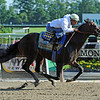 Paynter, Rajiv Maragh up works a bullet seven furlongs in 1:25<br /> Sunday morning at Belmont...<br /> © 2012 Rick Samuels/The Blood-Horse