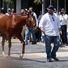 Trainer Doug O'Neil walks with I'll Have Another moments before the announcement of his retirement from racing after tendonitis was discovered this morning after his exercise period at Belmont Park in Elmont, N.Y. June 8, 2012.   I'll Have Another was to try for the thoroughbred racings Triple Crown in the Belmont Stakes tomorrow.<br /> Photo by Skip Dickstein