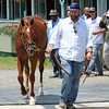 Trainer Doug O'Neill leads Kentucky Derby/Preakness winner I'll Have Another to the press conference outside barn 2 annoucing his retirement due to tendonitis in his front left leg.<br /> © 2012 Rick Samuels/Blood-Horse