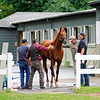 Caption:  I'll Have Another gets a bath<br /> Belmont Park, June 4, 2012, Elmont, N.Y.<br /> Horses on the track in the morning, grazing, and trainers/connections talking and watching their horses.<br /> Belmont2012 Works1 6_4_12 image587<br /> Photo by Anne M. Eberhardt