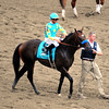 Paynter w/Mike Smith up prepare to load into the starting gate prior to finishing second in the 144th Running of the Belmont Stakes at Belmont Park on June 9, 2012.<br /> Photo by Chad Harmon