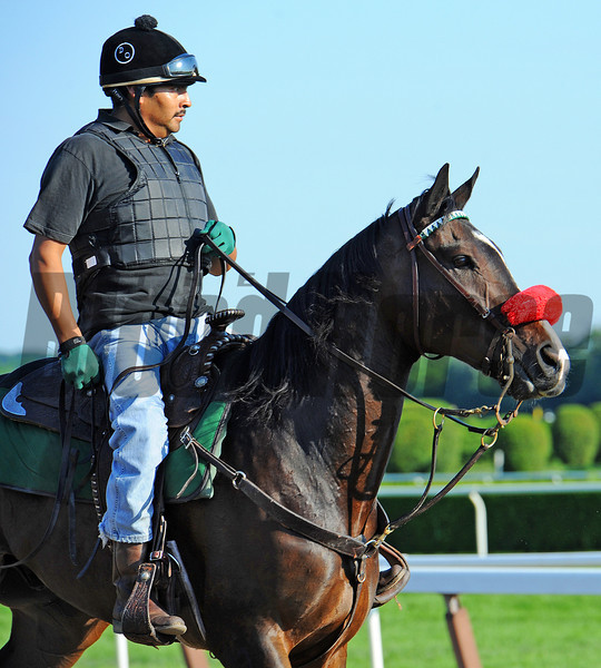 Team O'Neill outrider Sabas Rivera on Lava Man...<br /> © 2012 Rick Samuels/The Blood-Horse