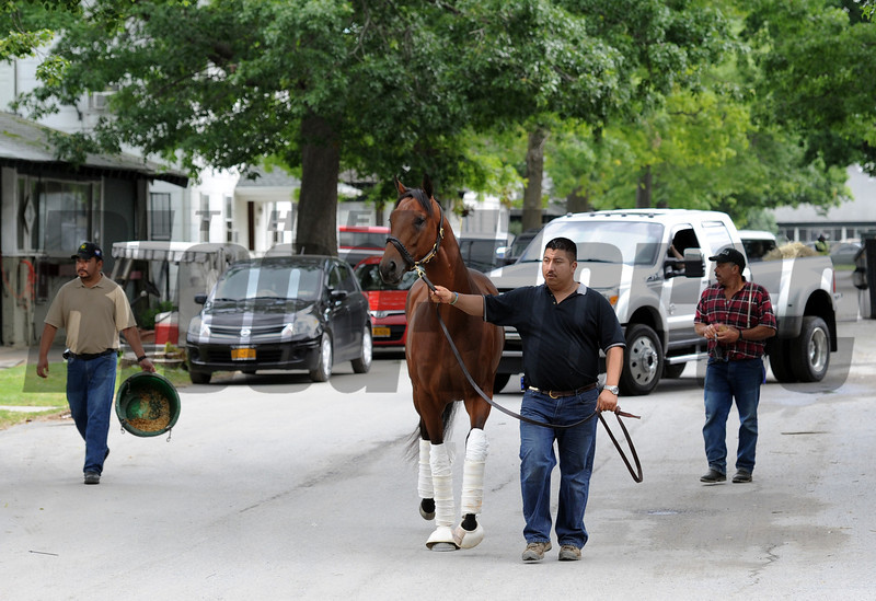 Optimizer on his way to the Belmont Stakes detention barn Wednesday morning...<br /> © 2012 Rick Samuels/The Blood-Horse