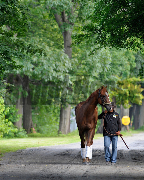 Caption:  Dullahan arrives at stakes barn 2.<br /> Belmont Park, June 6, 2012, Elmont, N.Y.<br /> Training hours activity on the track and at the barn.<br /> Photo by Anne M. Eberhardt