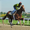 Dullahan finishing his gallop Wednesday morning at Belmont...<br /> © 2012 Rick Samuels/The Blood-Horse