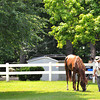 Belmont Stakes morning line second choice Dullahan, grazes Thursday afternoon at Belmont...<br /> © 2012 Rick Samuels/The Blood-Horse
