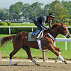 Kentucky Derby/Preakness winner I'll Have Another, gallops 1 mile Wednesday morning at Belmont...<br /> © 2012 Rick Samuels/The Blood-Horse