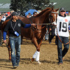 I'll Have Another in the Derby Walk-up<br /> © 2012 Rick Samuels/The Blood-Horse
