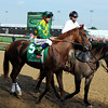 Dullan before the 2012 Kentucky Derby.<br /> Photo by Dave Harmon