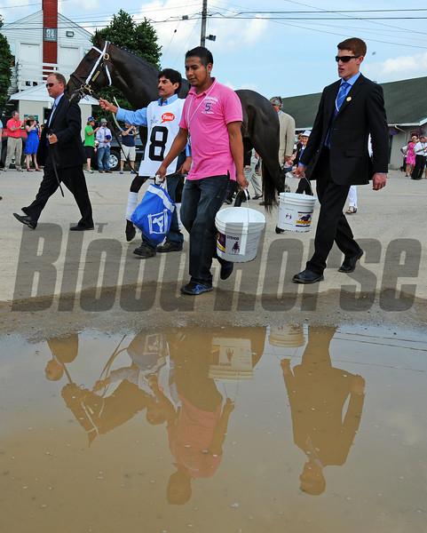 Sabercat<br /> © 2012 Rick Samuels/The Blood-Horse
