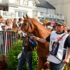 I'll Have Another in the paddock<br /> I'll Have Another with Mario Gutierrez up wins the Kentucky Derby presented by Yum<br /> at Churchill Downs near Louisville, Ky. on May 5, 2012.<br /> Photo by Anne M. Eberhardt