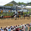 Four white/grey arabians finish in the top 5 at Pimlico Racecourse on May 19, 2012.