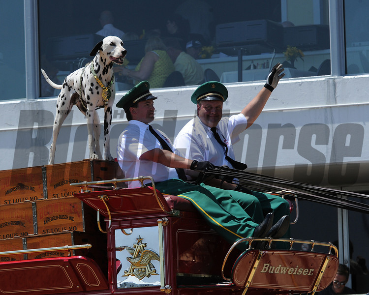 Scenes,  Budwiser Clydesdales, Pimlico Race Track, Baltimore, MD 5/19/12, Photo by Mathea Kelley ,
