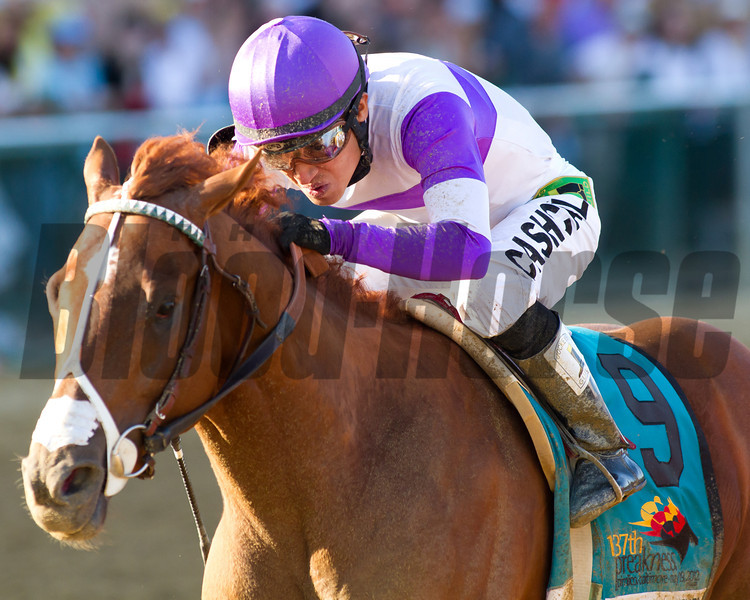 I'll Have Another<br /> Preakness 137<br /> Photo by Steve Heuertz
