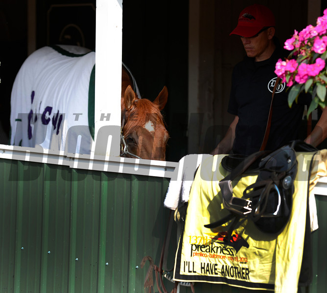 2012 Kentucky Derby winner I'll Have Another pauses to take a drink after his morning work at Pimilico Race Course in Baltimore, MD May 16, 2012.  He will enter Saturday's Preakness Stakes where he will contest the second jewel of Thoroughbred racing's Triple Crown.<br /> Photo by Skip Dickstein