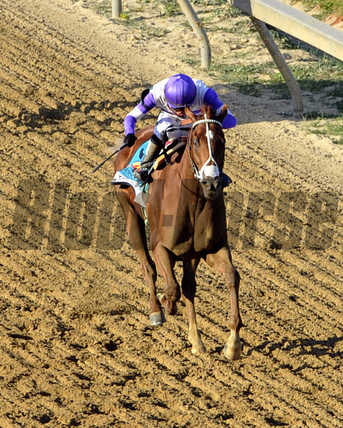 I'll Have Another w/Mario Gutierrez up wins the 137th Running of the Preakness Stakes at Pimlico Racecourse on May 19, 2012.<br /> Photo by Chad Harmon
