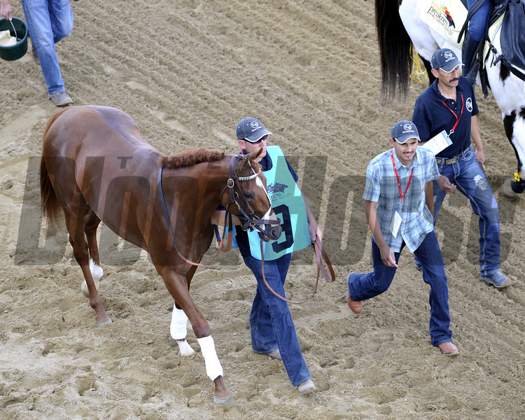 I'll Have Another during the Walkover at Pimlico Racecourse on May 19, 2012.<br /> Photo by Chad Harmon