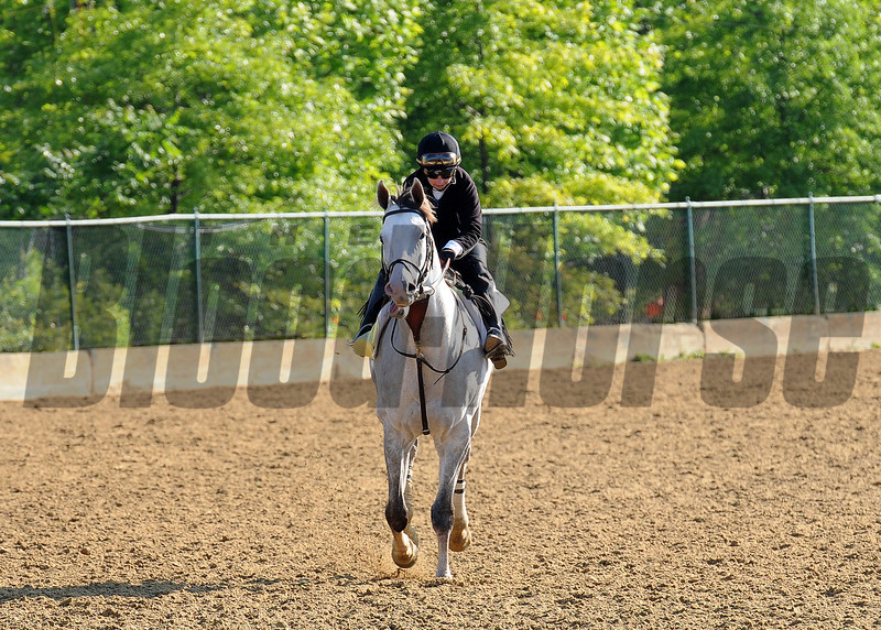 Cozzetti at Pimlico Friday morning...<br /> © 2012 Rick Samuels/The Blood-Horse