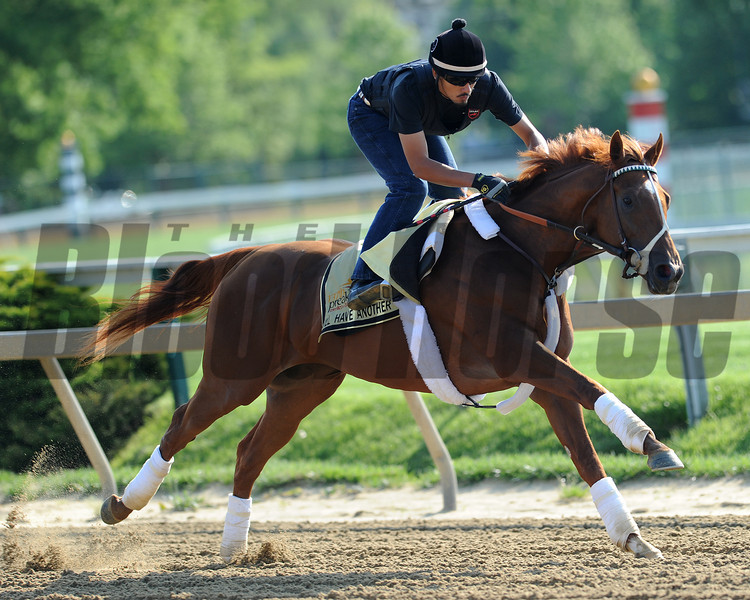 I'll Have Another Pimlico Race Track;   Baltimore, MD 5/17/12, Photo by Mathea Kelley