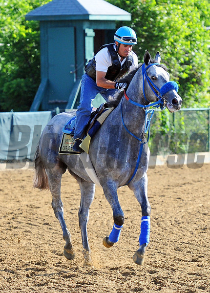 Creative Cause at Pimlico Friday morning...<br /> © 2012 Rick Samuels/The Blood-Horse