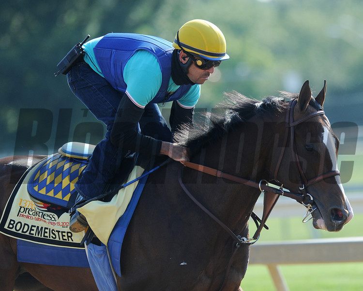 Bodemeister, Pimlico Race Track, Baltimore, MD 5/17/12, Photo by Mathea Kelley
