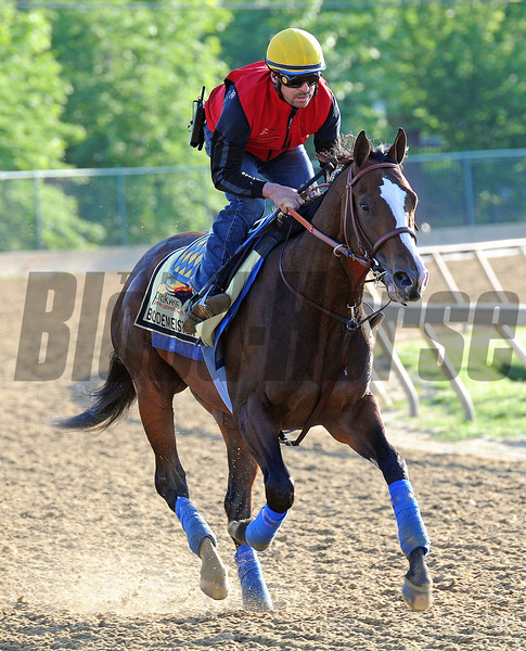 Kentucky Derby runner-up Bodemeister at Pimlico Friday morning...<br /> © 2012 Rick Samuels/The Blood-Horse