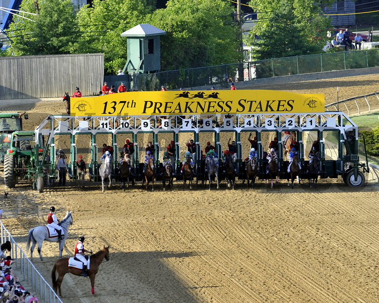 The field for the 137th Preakness leaves the gate at Pimlico on May 19, 2012.<br /> Photo by Chad Harmon.