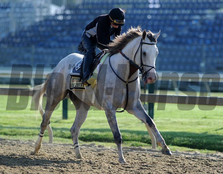 Cozzetti;  Pimlico Race Track, Baltimore, MD 5/18/12, Photo by Mathea Kelley