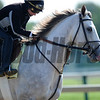 Cozzetti, Pimlico Race Track, Baltimore, MD 5/17/12, Photo by Mathea Kelley