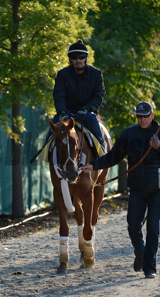 I'll Have Another returns after his exercise in preparation for the Preakness Stakes May 18, 2012.  <br /> Skip Dickstein Photo