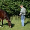 Went the Day Well after his exercise in preparation for the Preakness Stakes May 18, 2012.  <br /> Skip Dickstein Photo