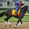 Prospective gallops at Churchill Downs. 5/1/2012<br /> Photo by Mallory Haigh