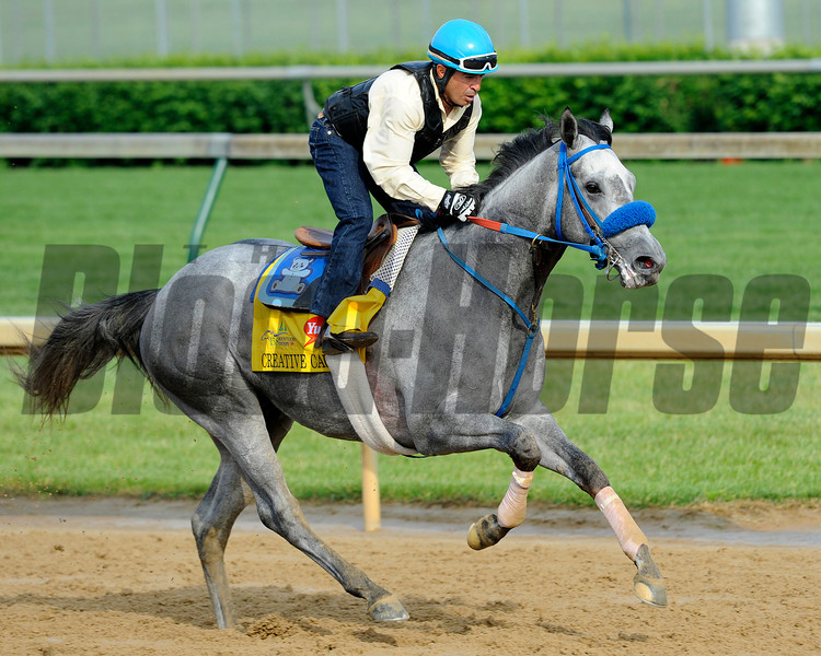 Creative Cause, on track for first time. Kentucky Derby and Kentucky Oaks contenders on the track at Churchill Downs near Louisville, Ky. on April 29, 2012.<br /> Photo by Anne M. Eberhardt