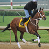 Done Talking gallops at Churchill Downs. 5/1/2012<br /> Photo by Mallory Haigh
