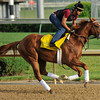 I'll Have Another gallops at Churchill Downs.<br /> Photo by Mallory Haigh