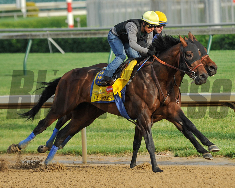 Liason gallops out after a work in-company at Churchill Downs April 30th.<br /> Photo by Mallory Haigh